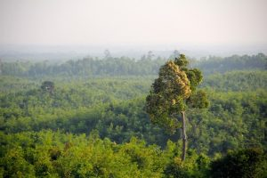 Forests such as Mahamyaing in central Myanmar are a priority for conservation in the country but deforestation has already ravaged much of the biodiversity here. (Photo: CC License)